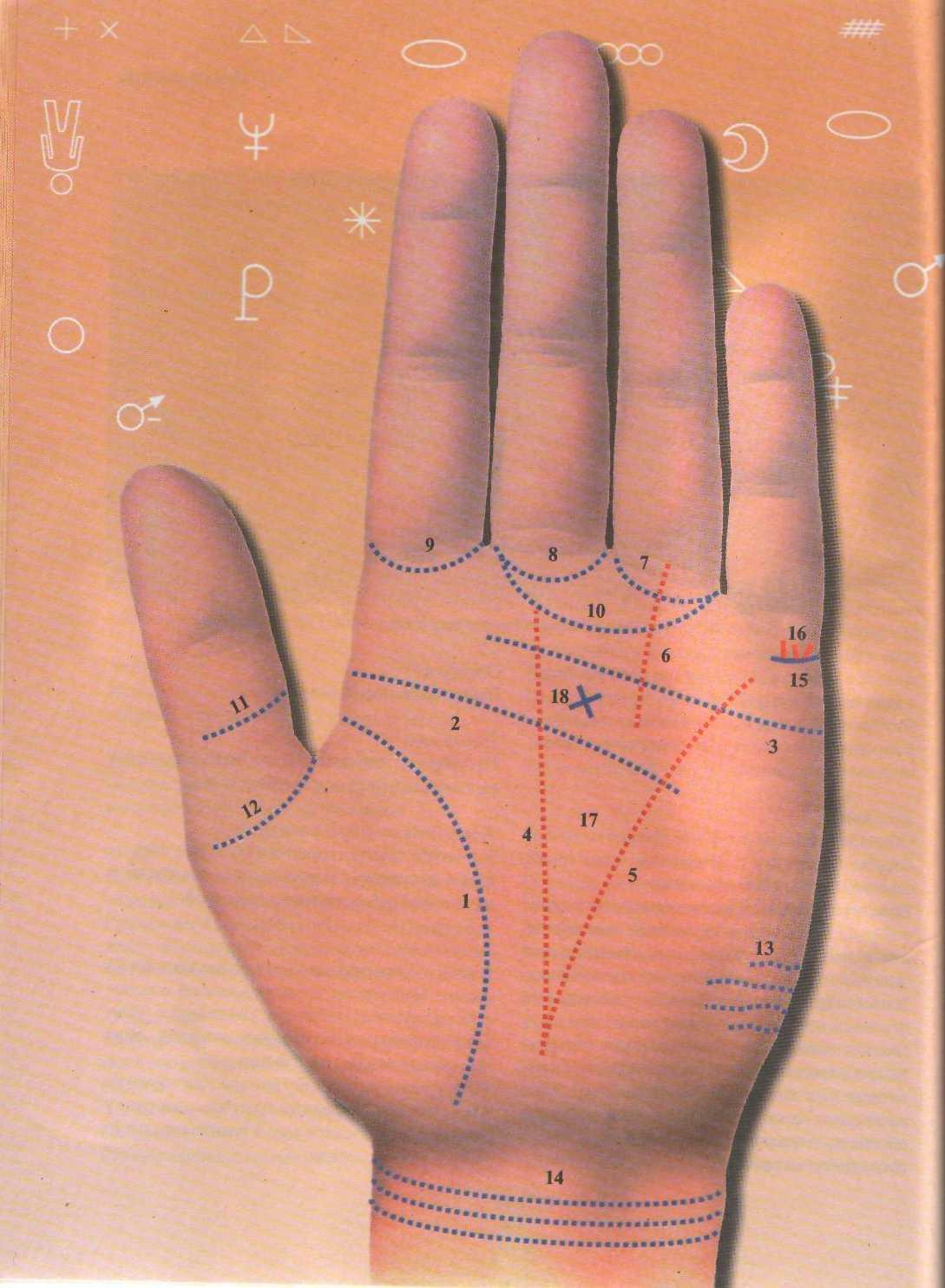 Линия жизни на руке фото с расшифровкой у детей и гадания