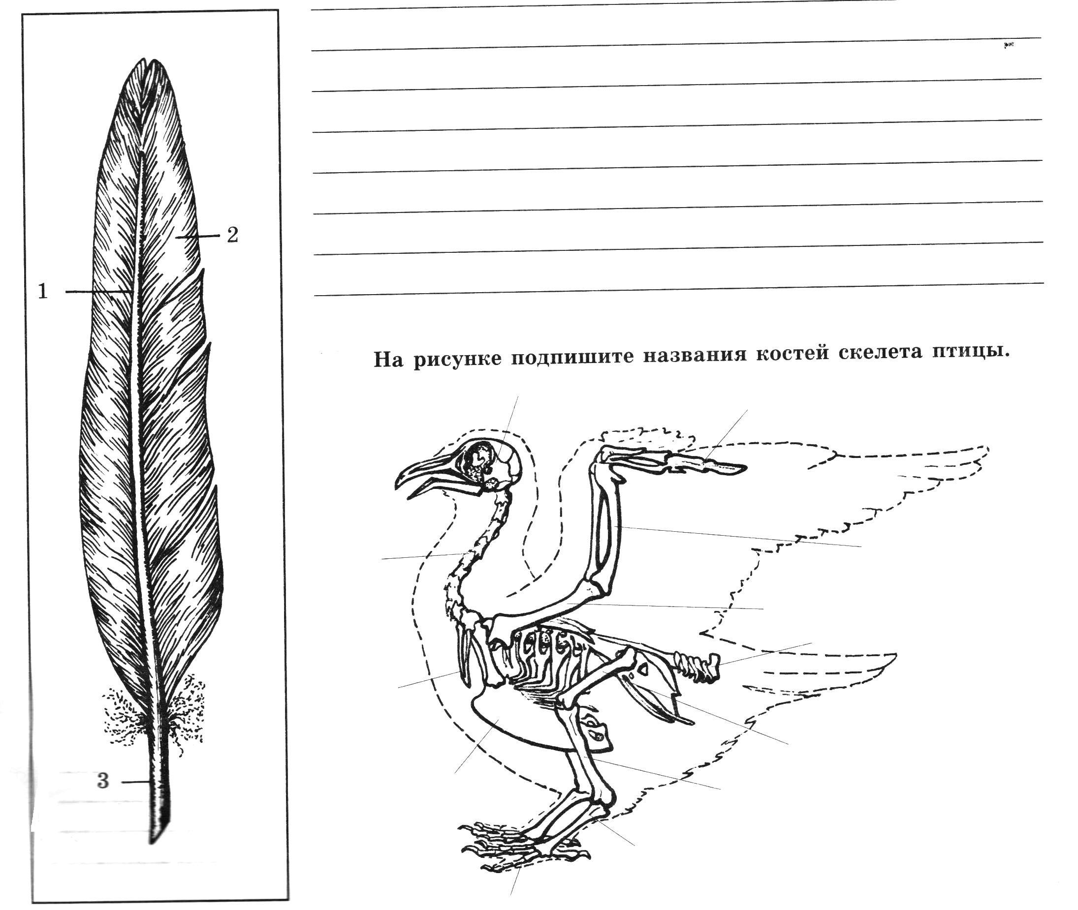 биология рисунки 7 класс