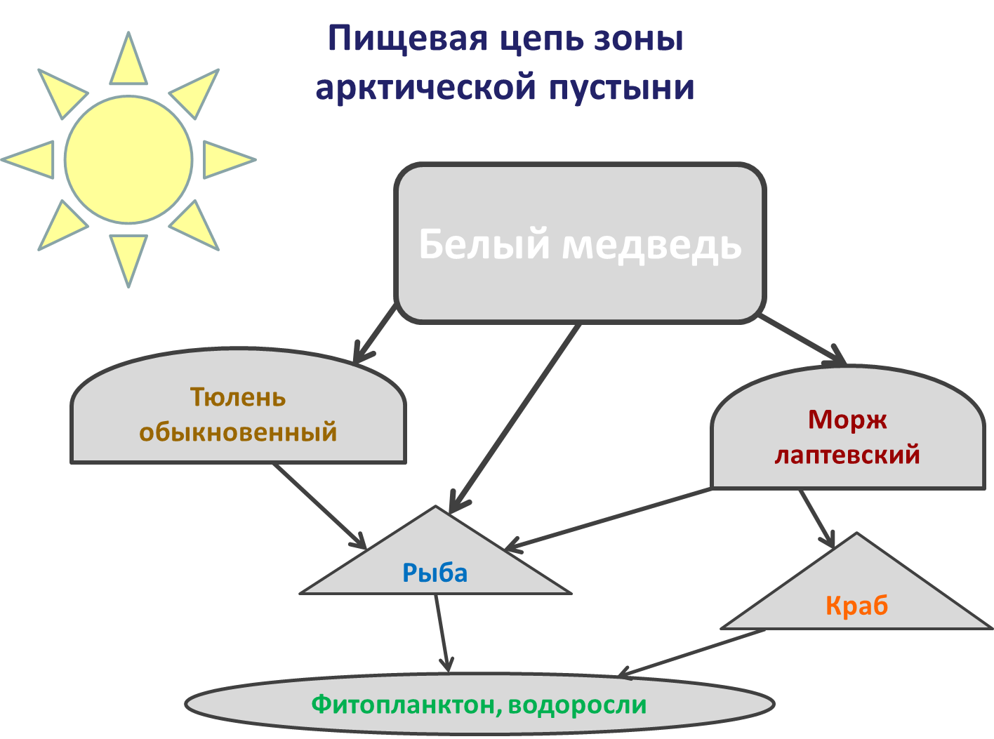 модели схемы пищевые цепи