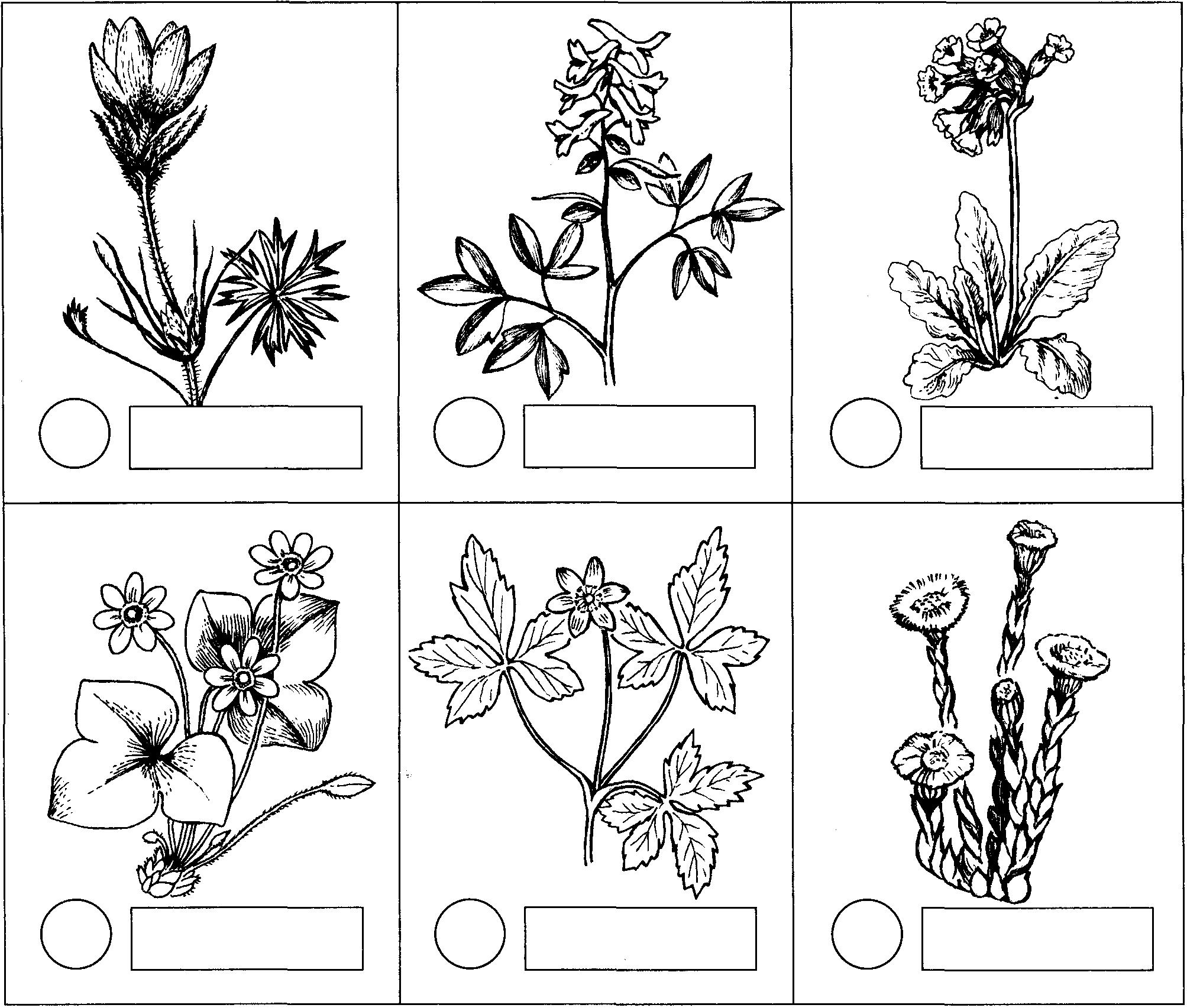 аллигатор соотнесите картинки со схемами и раскрасьте кружок яичной скорлупой