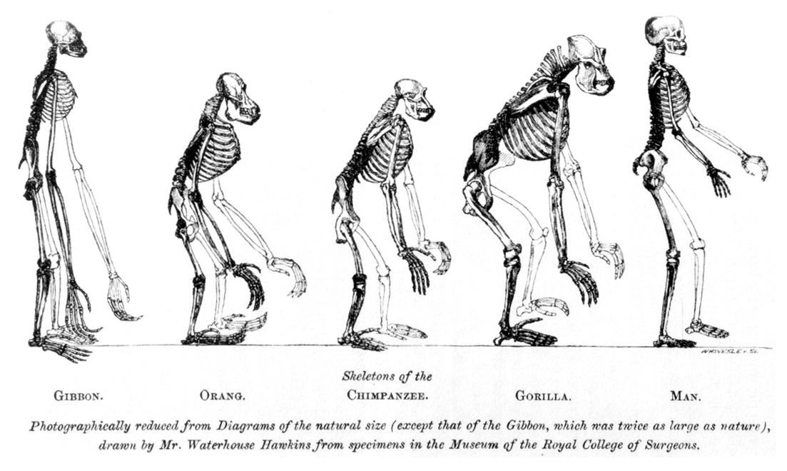 Основоположники современной (синтетической) теории эволюции чарльз дарвин